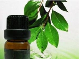 Giảm tình trạng sẹo mụn với tinh dầu trà xanh nguyên chất