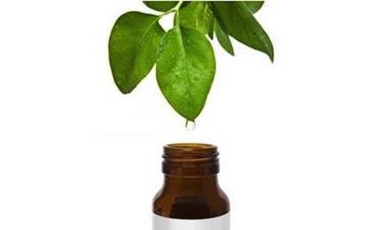 Giảm tình trạng sẹo mụn với tinh dầu trà xanh nguyên chất 2