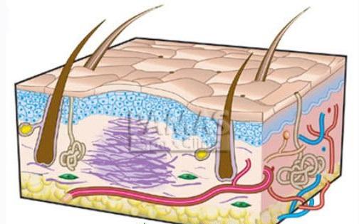 Dùng nguyên liệu tự nhiên có phải là cách trị sẹo lồi trên da hiệu quả nhất2