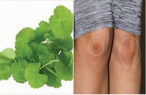 Chiêu độc cách trị sẹo thâm ở chân bằng rau má tại nhà